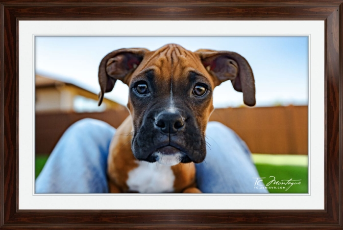 Puppy Play print framed in Walnut Brown