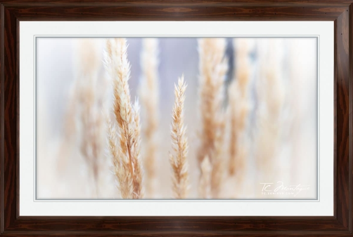 Day Dreams print framed in Walnut Brown