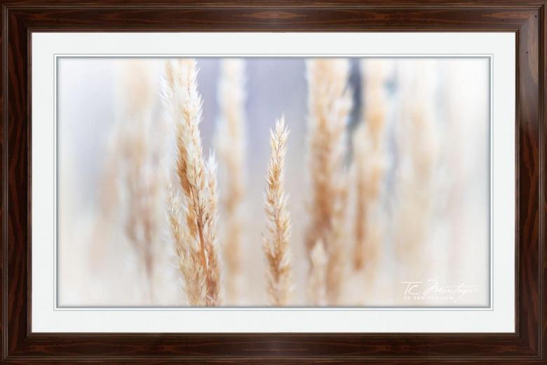 Day Dreams print framed in Walnut Brown
