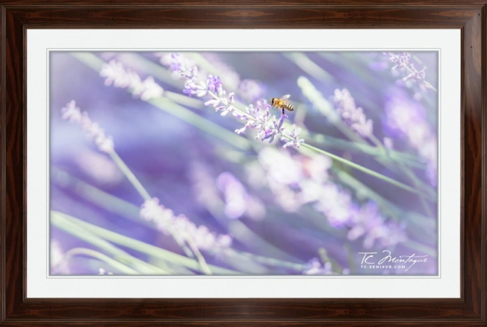 Bumblebee Paradise print framed in Walnut Brown