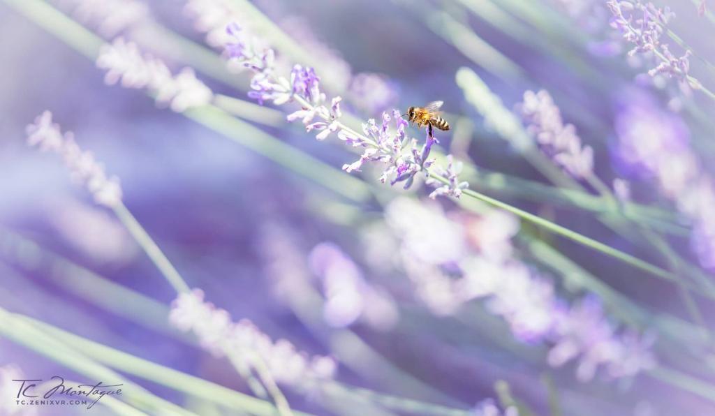 Bumblebee Paradise print