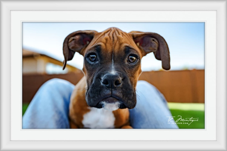 Puppy Play print