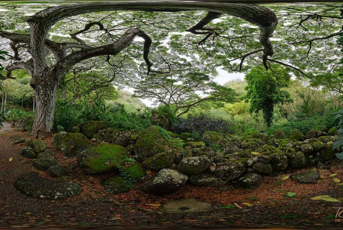 Beneath the Rain Tree